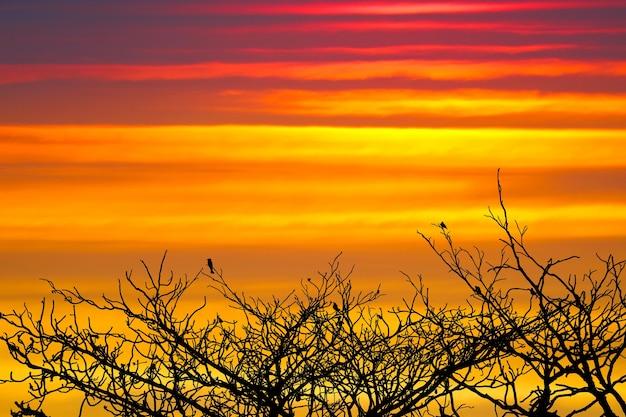 Закат обратно на силуэт птицы, висящие на сухом дереве, радужное облако на небе