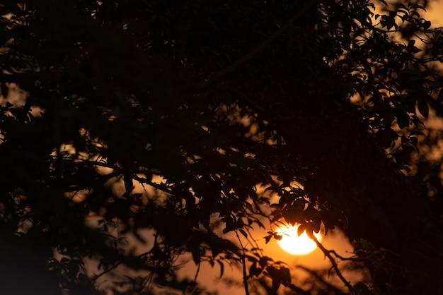 일몰, 필드 깊이가 작은 자부티카바 나무 가지를 통해 본 아름다운 일몰. 선택적 초점.