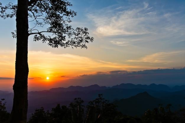 Заход солнца за деревом над горой.