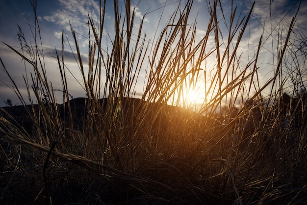 Sunset, evening in the field. sun rays shine through the tall grass on the background of hills and blue sky with white clouds. beautiful natural background, eco-friendly area.