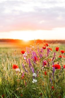 Sunset over a field of wild flowers in the summertime