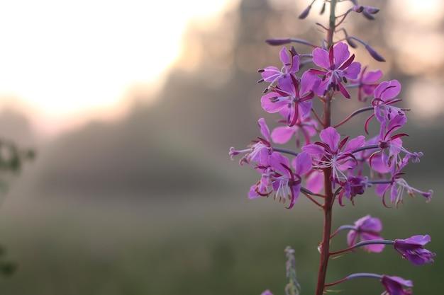 일몰 꽃 안개