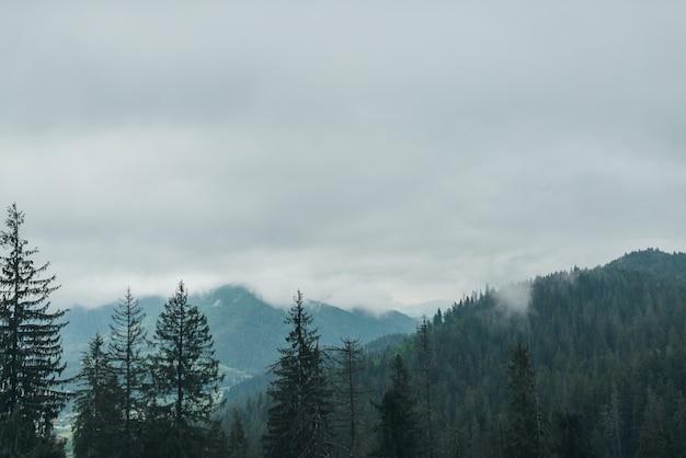 Закат туманно дерево фон чудес