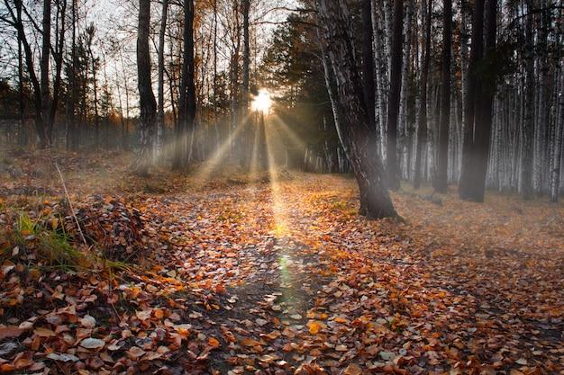 가을 숲에서 일몰, 지상 노란색 단풍. 숲 속의 안개. 마법의 숲.