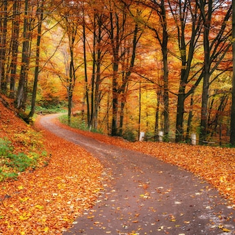 秋の森の夕日