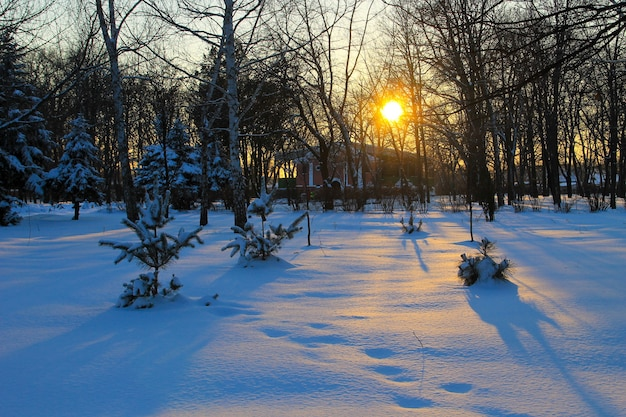 冬の都市公園の夕日