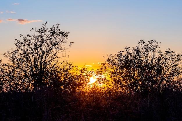 フィールドに沈む夕日。日没時の空の背景に木のシルエット