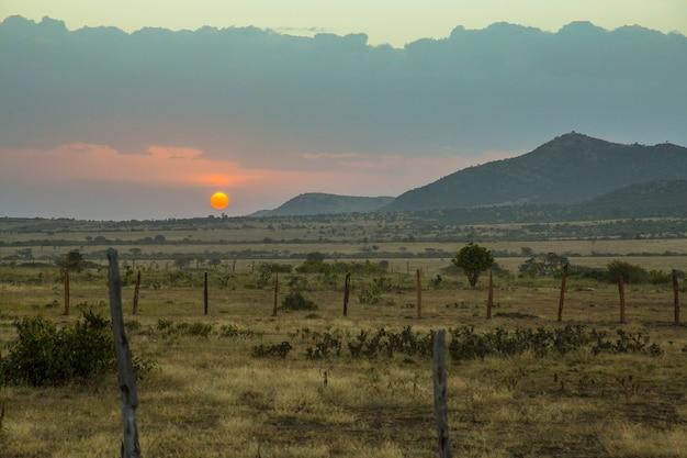 マサイマラ国立公園の夕日、サバンナの野生動物。ケニア
