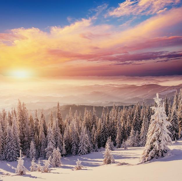 겨울 산에서 일몰입니다. 카 르 파 티아 우크라이나 유럽