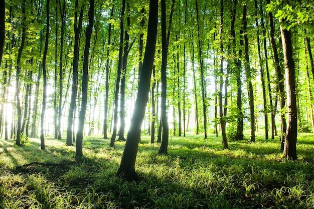 森の中に沈む夕日