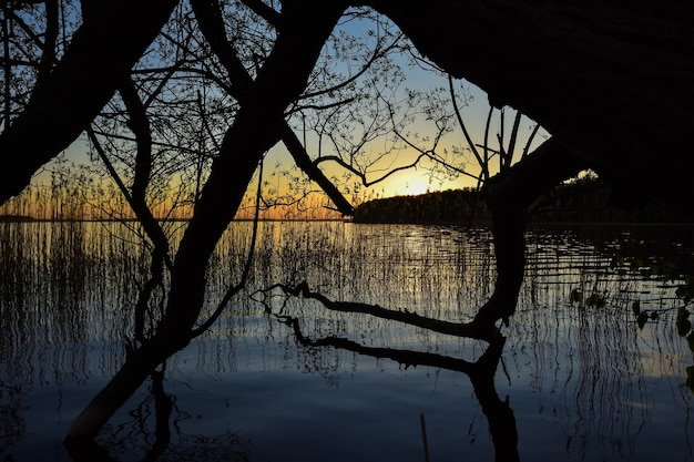 Sunset on the lake, silhouettes of trees on the background of sunset on the lake