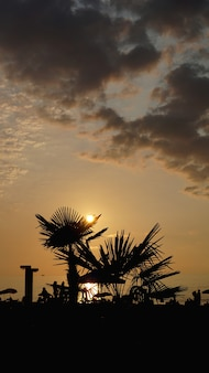 夕日の風景。ビーチの夕日。日没の熱帯のビーチ、夏のヤシの木のシルエット