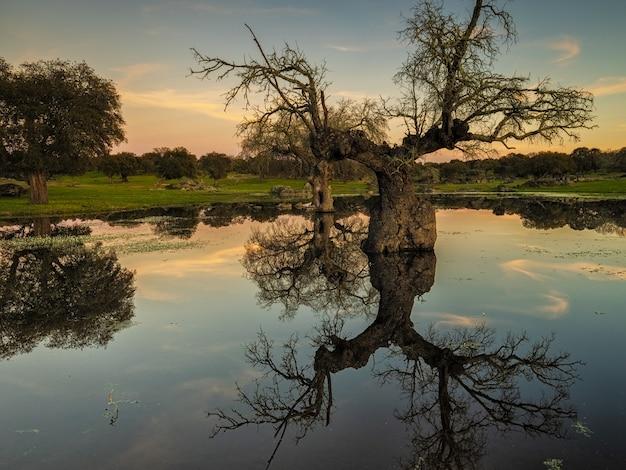 Sunset landscape in a lagoon near arroyo de la luz. extremadura. spain.