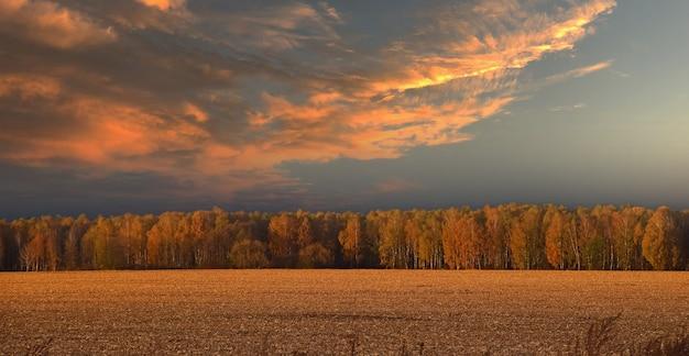 가을 그루터기 농경지, 수평선의 나무, 극적인 폭풍우 치는 하늘의 일몰 풍경
