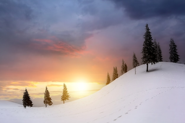 Sunset landscape with mountain hills and snowy valley with spruce trees under vibrant colorful evening sky in winter.