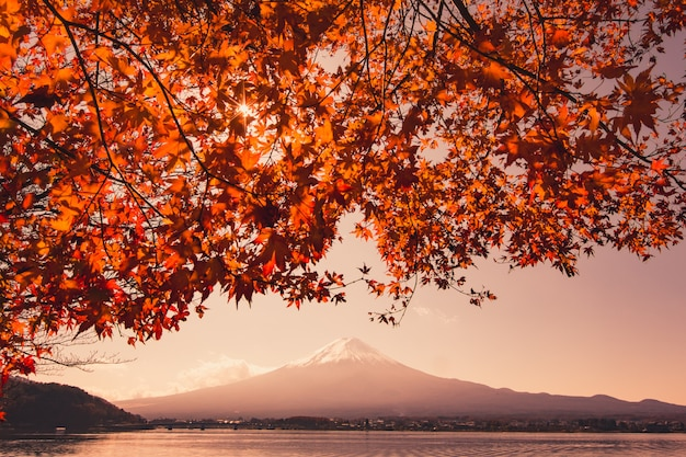 Sunset at mountain fuji and red maple tree in japan autumn season