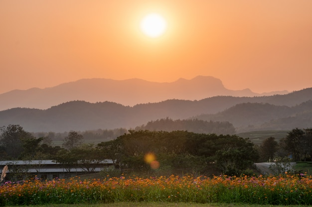 Sunset over mountain with cosmos field