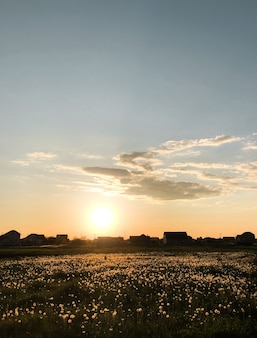 日没自然地平線牧草地屋外雲夏の背景。タンポポに輝く太陽