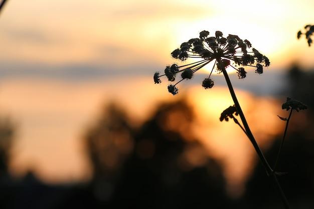 日没の自然の木sihleuette