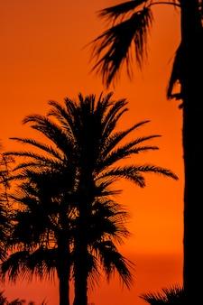 Sunset near of the beach of san fernando, cadiz, spain
