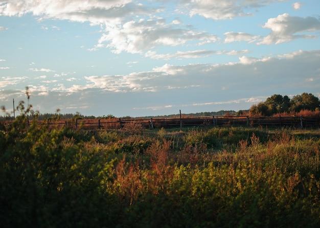 曇り空を背景に収穫期の9月に小麦やライ麦の畑に沈む夕日。農場の美しい風景。