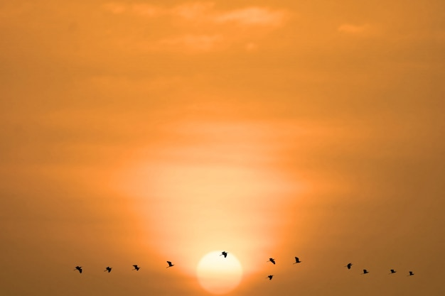 Закат вечером светло-оранжевого облака на небе и летящих птиц