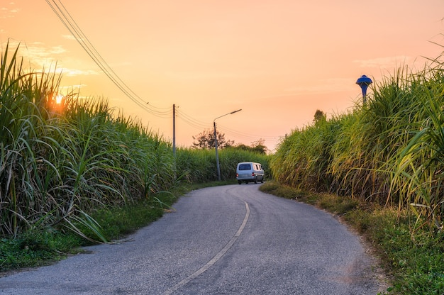 커브 아스팔트 도로를 운전하는 밴이 있는 사탕수수 농장의 일몰