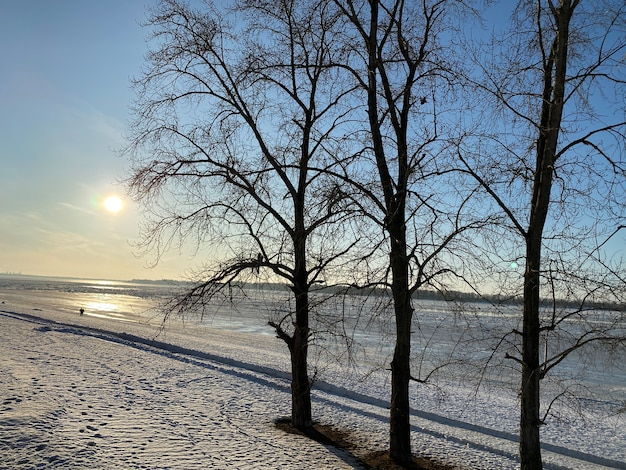 凍ったヴォルガ川に沈む夕日。手前の雪に覆われた海岸には3本の木があります。遠くに男の氷のシルエット。