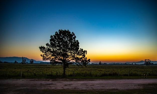 木のシルエットと道路の日没