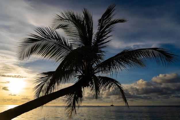 Закат на тропическом море с пальмой, летние каникулы, тропический курорт и концепция путешествия, копирование пространства