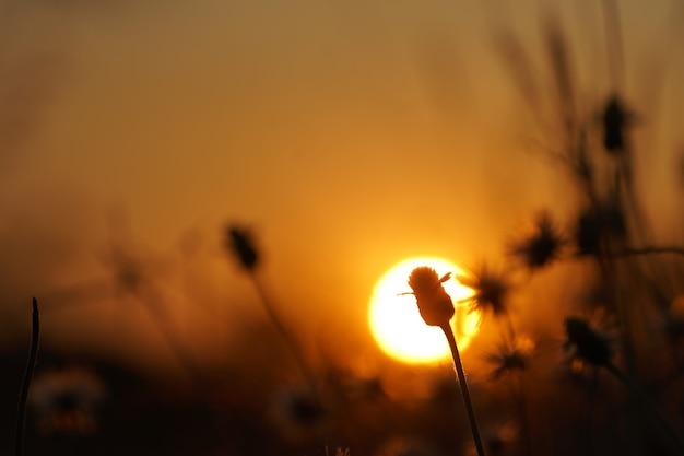 道路の側に草で日没のオレンジ色の光。