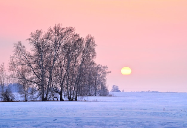 冬の野原に沈む夕日。雪の吹きだまり、裸の木、バラの空の太陽