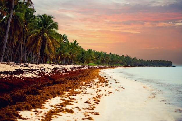 大西洋岸のドミニカ共和国のビーチに沈む夕日。美しい海岸の藻類、気候異常。汚れたビーチ。