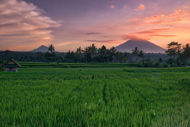 Sunset at the rice fields in bali
