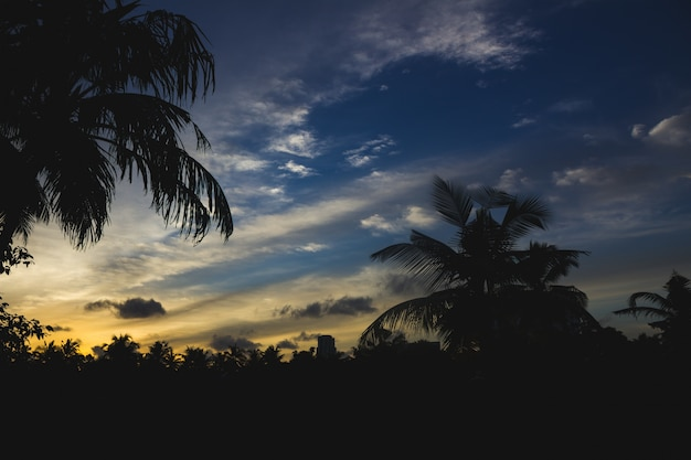 Sunset behind silhouettes of palm trees