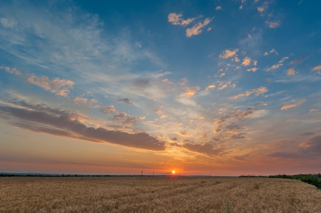Sunset sky over the wheat field