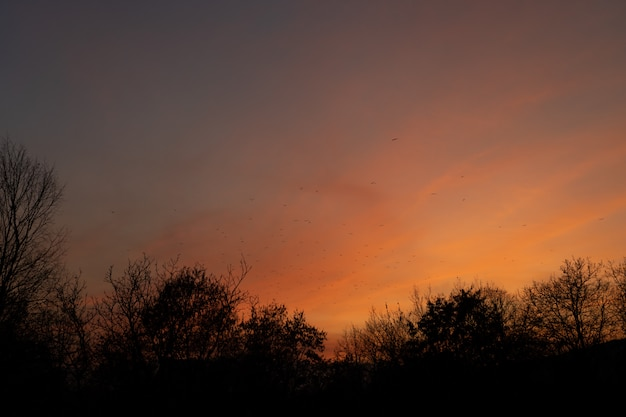 Sunset sky with birds and trees.