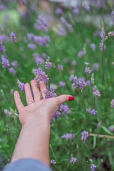 Tramonto su un campo di lavanda estiva. la mano di grls tocca il flo