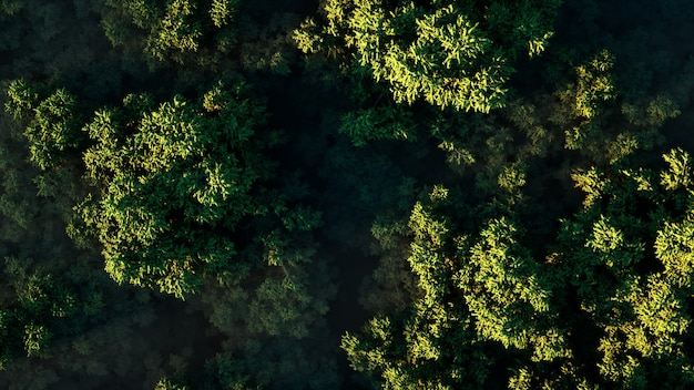 Sunset over a thick green forest in fog on a sunny day