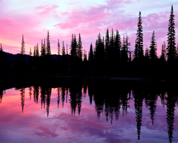 Sunset over tranquil lake and silhouetted trees in forest