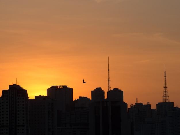 アンテナと鳥の建物のシルエットと夕日