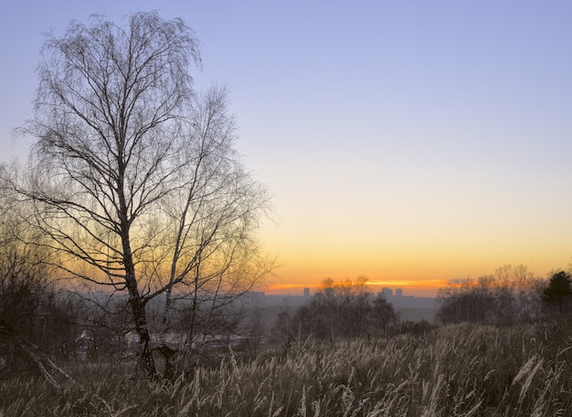 Sunset with birch and clear sky