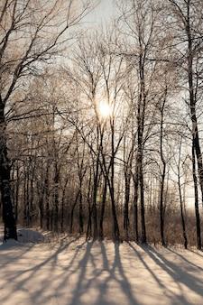 冬のオレンジ色の色合いの夕日 Premium写真