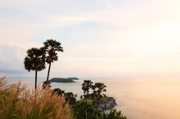 Sunset with sky, palm tree, grass over tropical sea at phromthep cape viewpoint in phuket thailand.