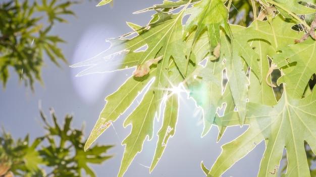 緑の葉から差し込むサンシャイン。キプロスの森。