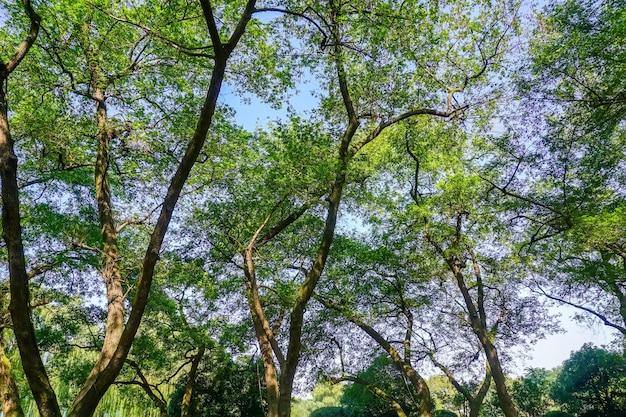 공원의 햇살 숲과 초원