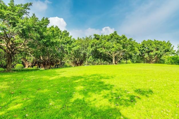 公園内のサンシャインの森と草原