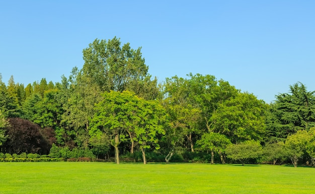 Солнечный лес и луга в парке