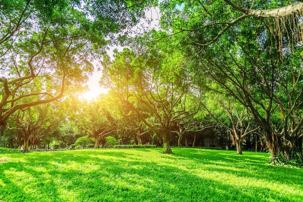 Sunshine forest and grassland in the park