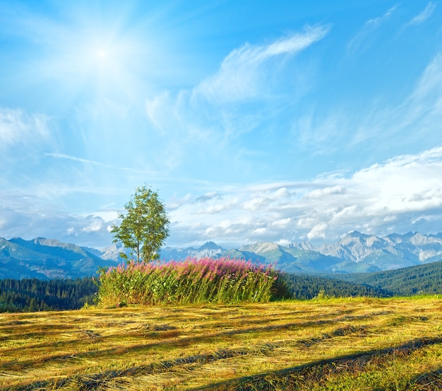 Sunshine above summer mountain country mown field and lonely tree and tatra range behind (gliczarow gorny, poland)